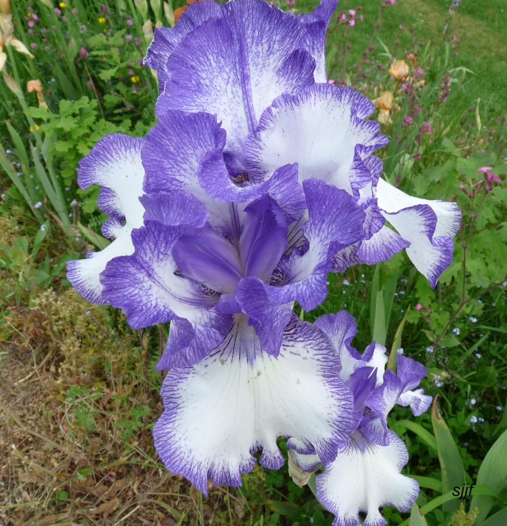 Vivaces for Aubade jardin d iris