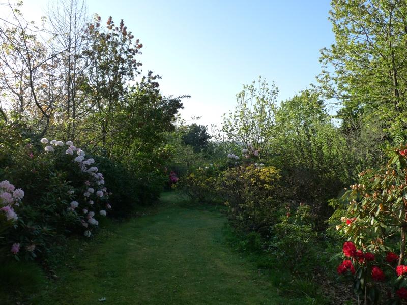 Jardin au petit matin for Au petit jardin proven